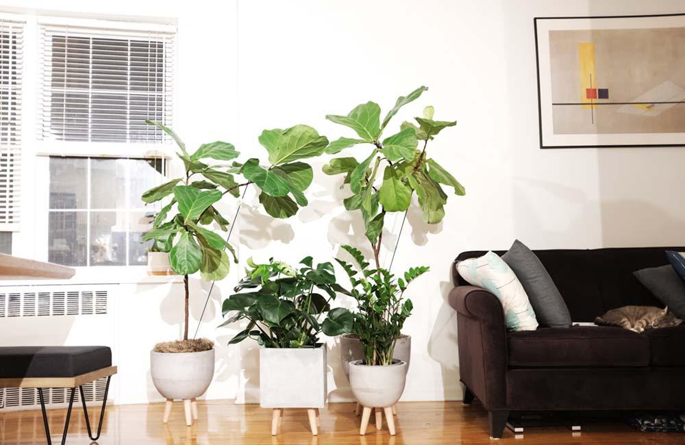 houseplantcover